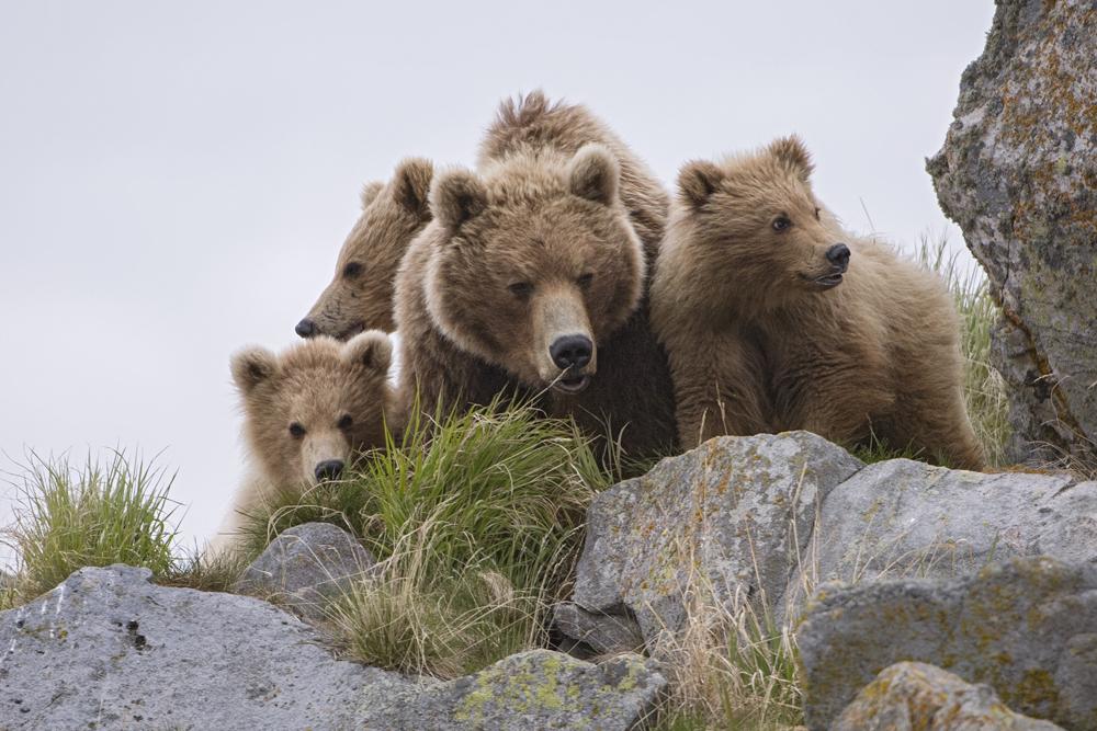 Terre des Ours Mère et sa famille