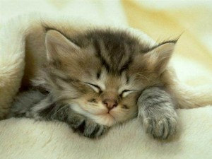 Petit Chat Cocooning